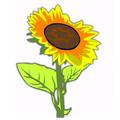Į kokią gėlę tu esi panašus/i?